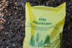 kora-drzewna2